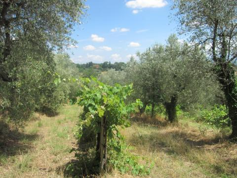 olive_grape_italy_convert_20140723002351