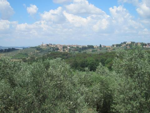 olive_tos_italy_convert_20140723001649