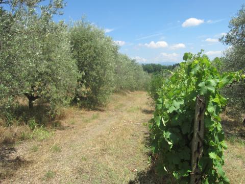 olive+n+grape_convert_20150315160053